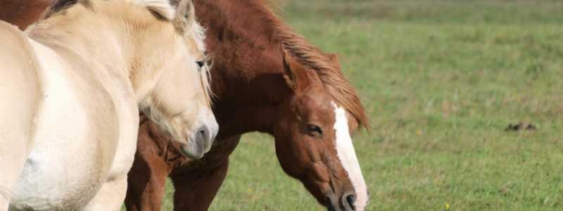 Bild: Pferde, über dts Nachrichtenagentur