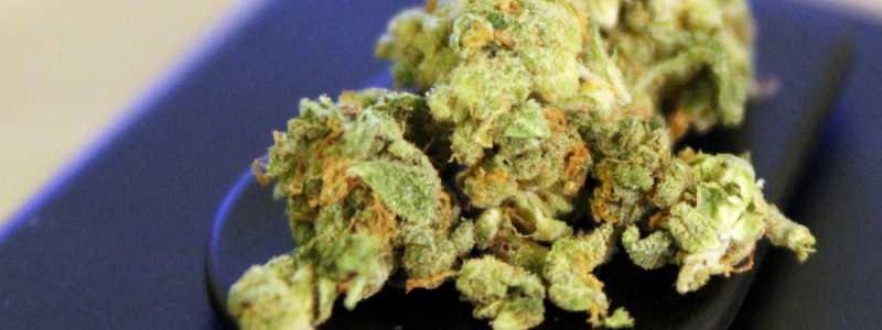 Bild: Cannabis, über dts Nachrichtenagentur