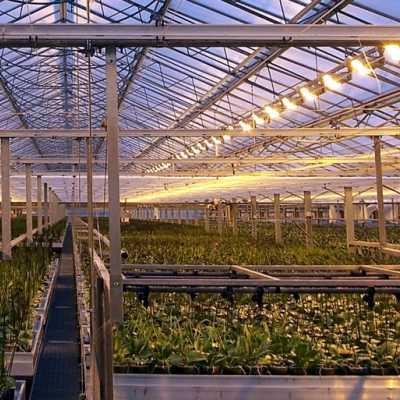 Bild: Pflanzen in einem Gewächshaus, über dts Nachrichtenagentur