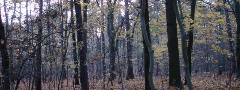 Bild: Wald, über dts Nachrichtenagentur