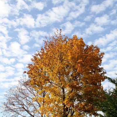 Bild: Herbstlicher Baum, über dts Nachrichtenagentur