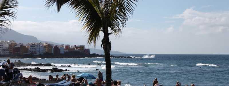 Bild: Palme an einem Strand, über dts Nachrichtenagentur