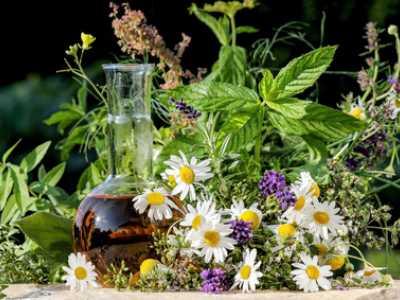 Viele Kräuter helfen gegen Erkältungsbeschwerden und können im heimischen Garten gezüchtet werden