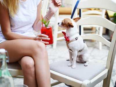 Ob klein oder groß: Hunde hellen den Alltag auf.