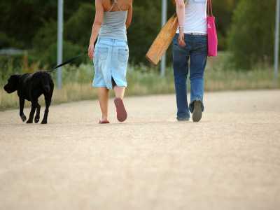 Mittagspause mit Hund - ein paar Schritte gehen und mit Kollegen plaudern verbessert das Betriebsklima und hält fit.